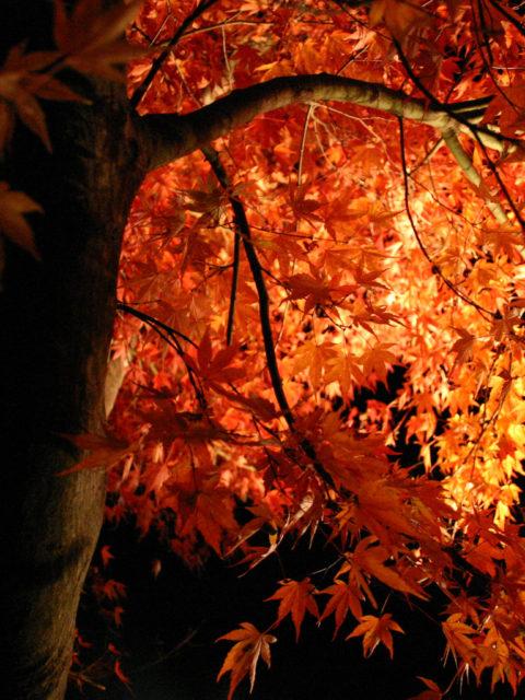 紅葉狩りに行ってきて、欲しいレンズが良くわかりました。