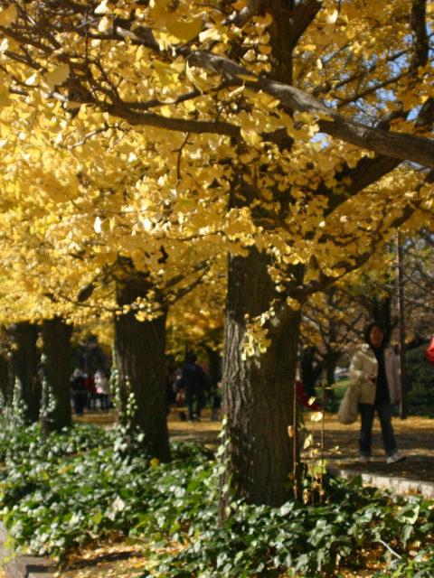 昭和記念公園再び。