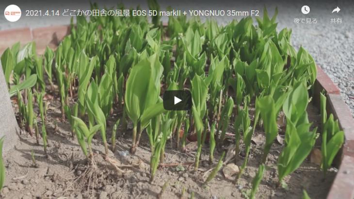 5D MarkII + YONGNUO 35mm F2 で撮る田舎の風景。
